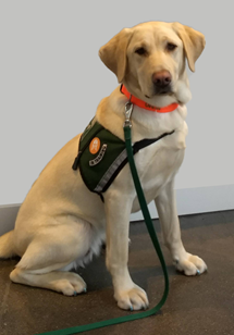 numo-the-service-dog-(1).png